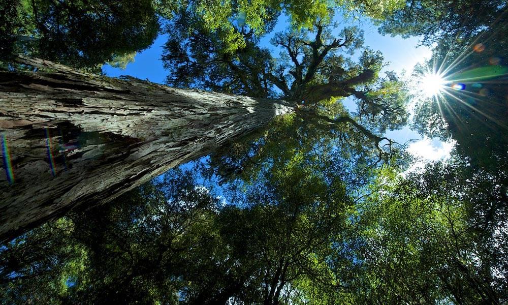 Planten En Bomen : Wandelen en bomen planten in het urewera regenwoud activiteiten